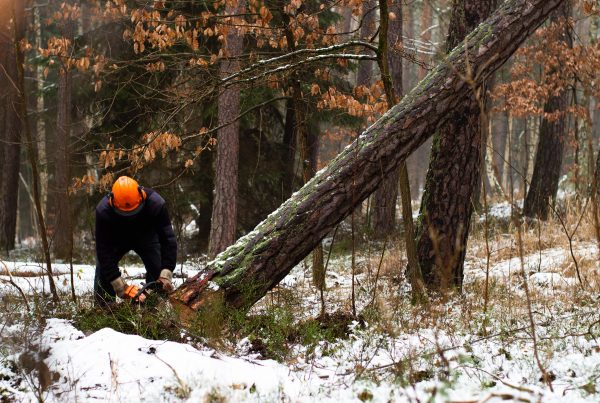 Forestry in Ontario